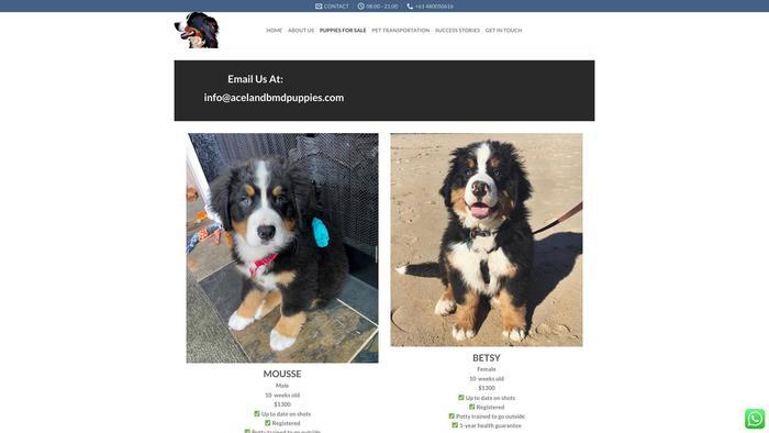 Acelandbmdpuppies.com - Bernese Mountain Dog Puppy Scam Review