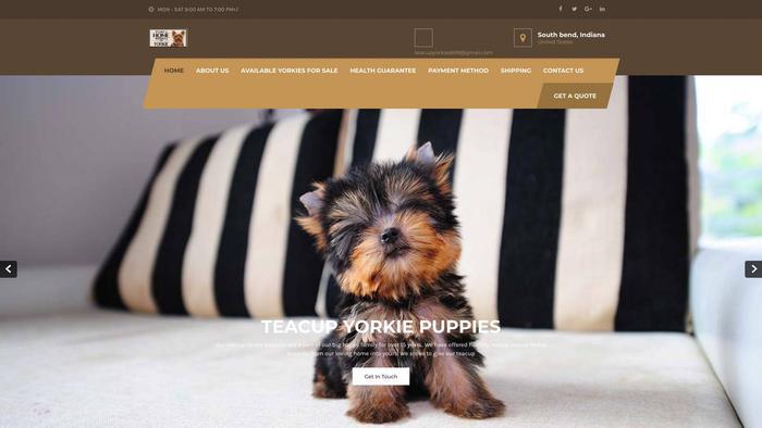 Teacupyorkiepuppies.store - Yorkshire Terrier Puppy Scam Review