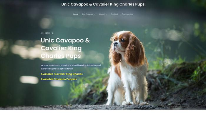 Uniccavapooandcavalierkingcharlespups.com - Cavalier King Charles Spaniel Puppy Scam Review