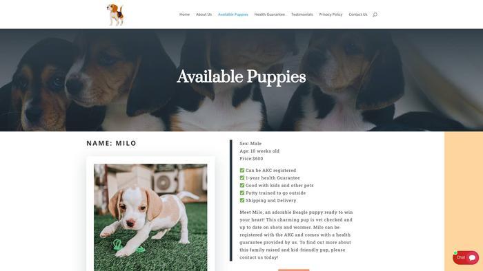 Beaglepuppieskennels.com - Beagle Puppy Scam Review
