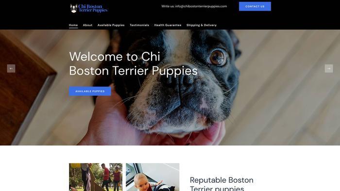Chibostonterrierpuppies.com - Boston Terrier Puppy Scam Review