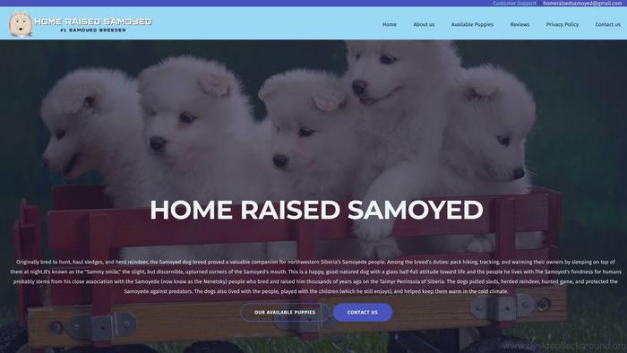 Homeraisedsamoyed.com - Samoyed Puppy Scam Review