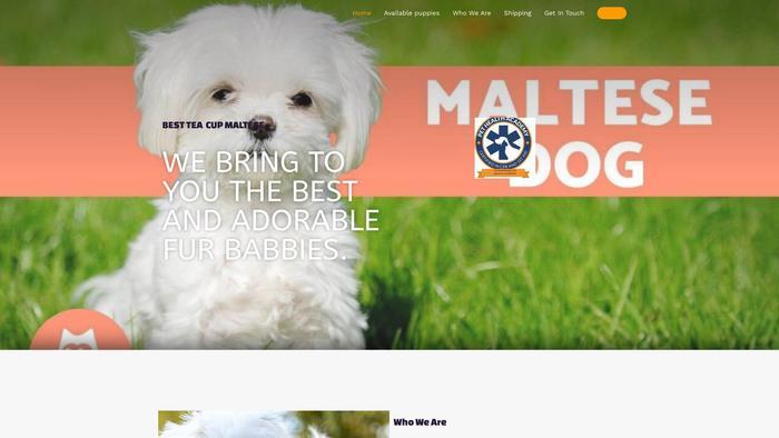 Minisizemaltese.com - Maltese Puppy Scam Review