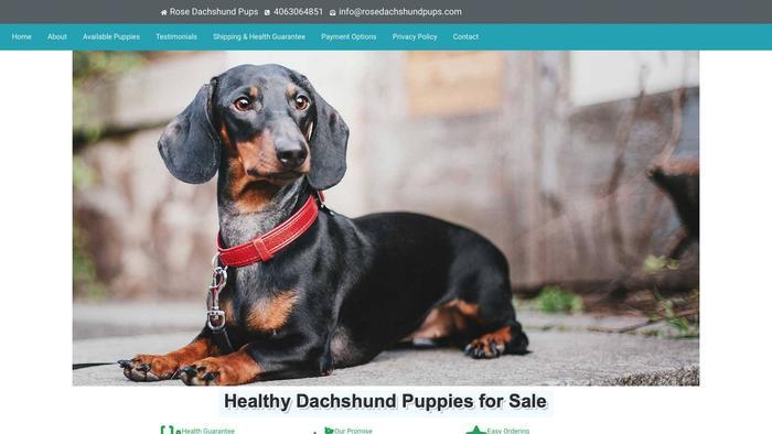 Rosedachshundpups.com - Dachshund Puppy Scam Review