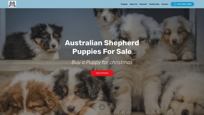 Australiansheperdpuppies.com - Australian Shepherd Puppy Scam Review