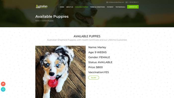 Australianshep.com - Germanshepherd Puppy Scam Review