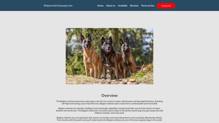 Belgianmalinoispuppi.com - Germanshepherd Puppy Scam Review