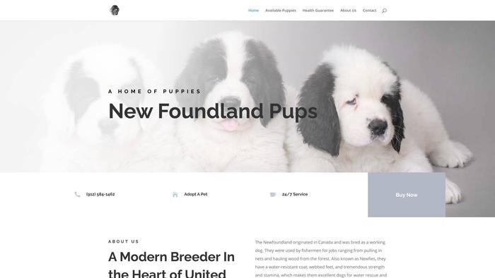 Mellownewfoundland.com - Saint Bernard Puppy Scam Review