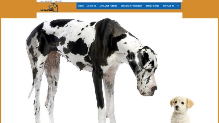 Solidgentlegiantpuppies.com - Great Dane Puppy Scam Review