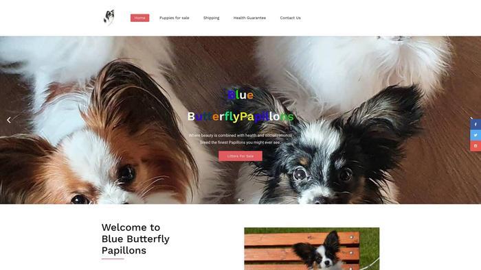Bluebutterflypapillons.com - Papillon Puppy Scam Review