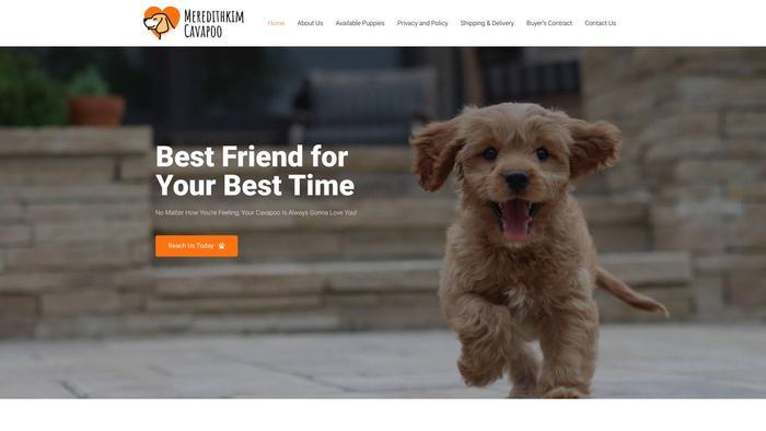 Meredithkimcavapoo.com - Cavapoo Puppy Scam Review