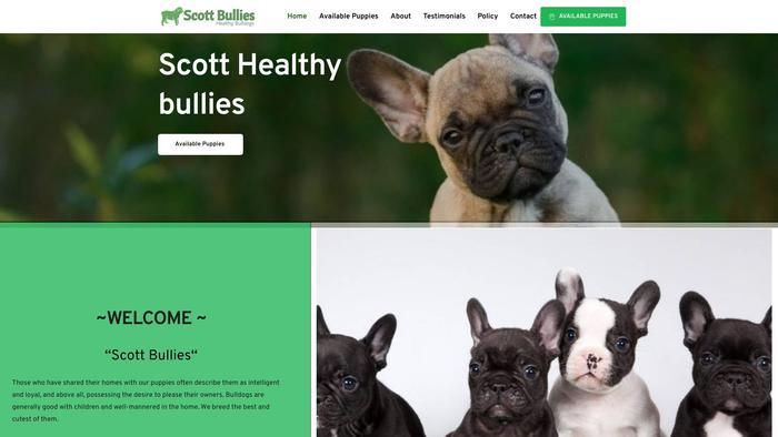 Scottbullies.com - Bulldog Puppy Scam Review
