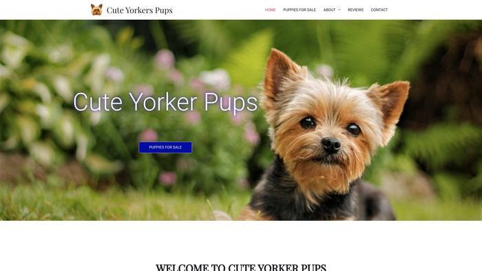 Cuteyorkiespuppies.xyz - Yorkshire Terrier Puppy Scam Review