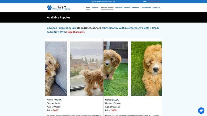 Edencavapoopuppies.com - Cavapoo Puppy Scam Review