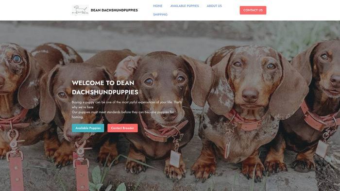 Deandachshund.com - Dachshund Puppy Scam Review