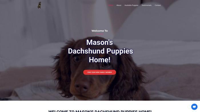 Masondachshundpups.com - Dachshund Puppy Scam Review