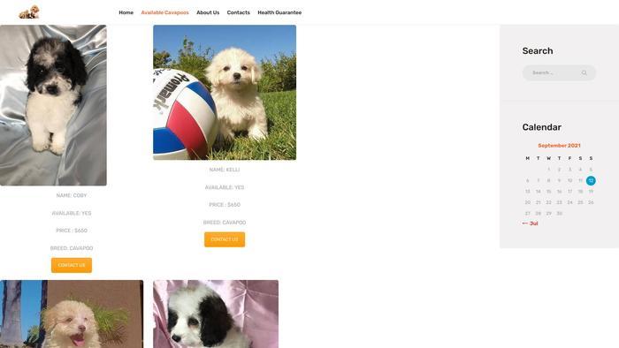 Findcavapoopuppies.com - Cavapoo Puppy Scam Review