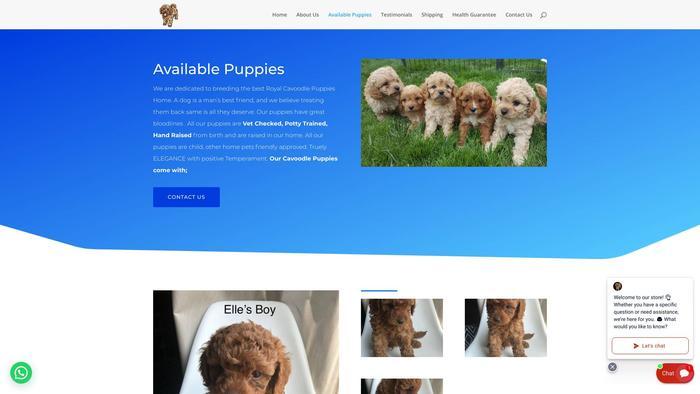 Royalcavoodlepuppieshome.com - Cavapoo Puppy Scam Review