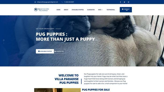 Villaparadisepugpuppies.com - Pug Puppy Scam Review