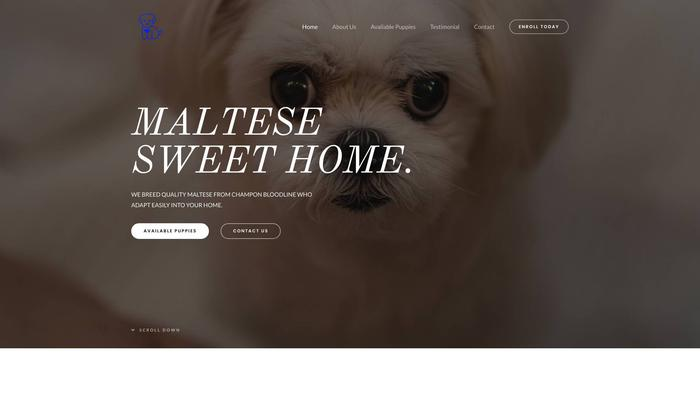 Maltesesweethome.com - Maltese Puppy Scam Review