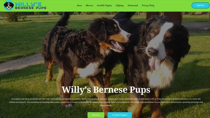Willysbernesepups.com - Bernese Mountain Dog Puppy Scam Review