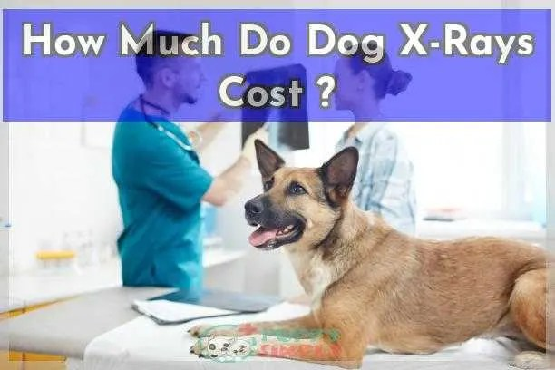 How Much Do Dog X Rays Cost Everything You Need To Know