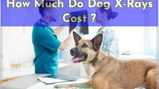 How Much Do Dog X-Rays Cost