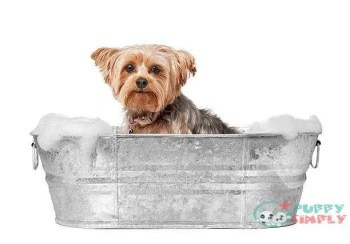 Dog Grooming how to get rid of skunk smell on a dog