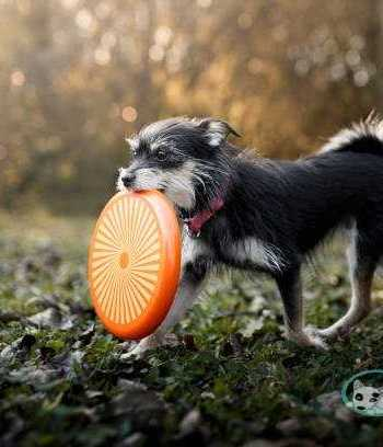 What You Should Look Out For In A Great Dog Frisbee?