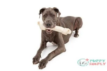 Great Dane Dog With Large Bone Things To Look For In A Good Rawhide For Dogs