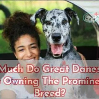 How Much Do Great Danes Cost To Owning The Prominent Breed