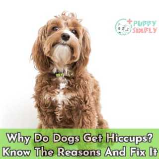 Why Do Dogs Get Hiccups Know The Reasons And Fix It