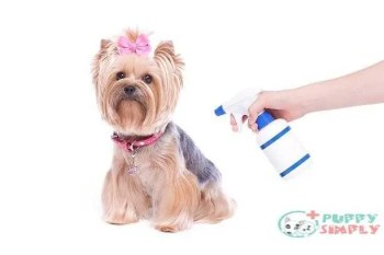 yorkshire terrier dog and flea and tick preventative - flea dogs s and pictures What To Look Out For With The Best Flea And Tick Treatment For Dogs