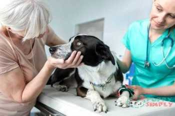 doctor and senior owner looking at dog on bed in veterinary clinic - senior dogs s and pictures Relation To Your Dog's Age Senior dogs