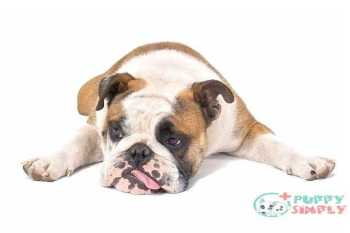 dog tired - depression dog s and pictures What Causes Liver Disease In Dogs?
