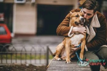 man kissing his furry best friend - staffordshire bull terrier stock pictures royalty-free photos & images Staffordshire Bull Terrier