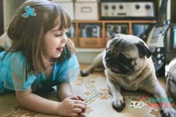 Pugtoy dog breeds