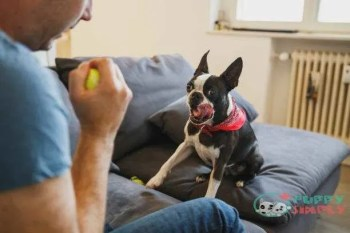 Teach Your Dog The quiet Command