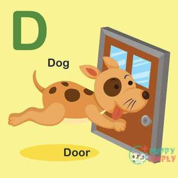 Types Of Dog Door