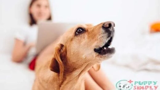 how to stop dog barking at night
