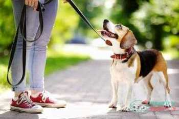 Training Your Dog With A Leash
