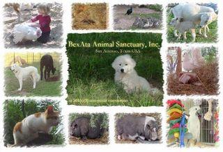 Bexata Animal Sanctuary