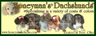 Honeyman's Miniature Dachshunds