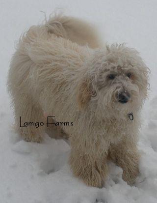 Lamgo Farms, LLC