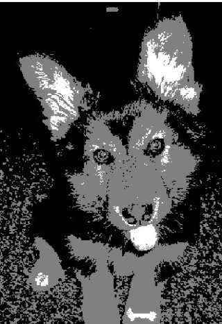 Moosonee Puppy Rescue
