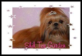 Shih Tzu Garden