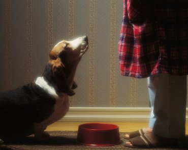 How to Choose Dog Food