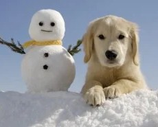 Picture of a snowman and puppy