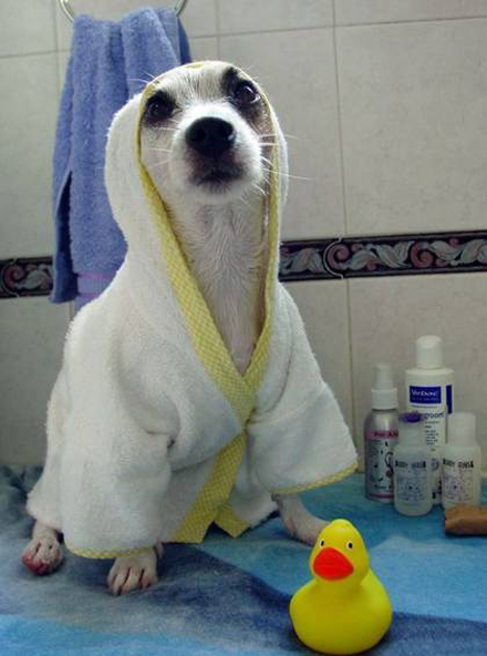Drying your dog after a bath