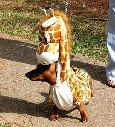 halloween dog costume funny animal